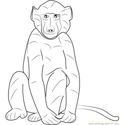 Cape Baboon Free Coloring Page for Kids