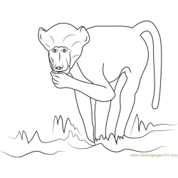 Chacma Baboon Free Coloring Page for Kids