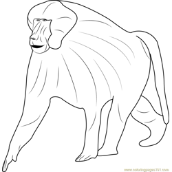 Guinea Baboon Free Coloring Page for Kids