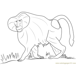 Hamadryas Baboon Free Coloring Page for Kids