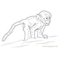 Happy Baby Baboon Free Coloring Page for Kids