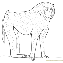 Olive Baboon Free Coloring Page for Kids