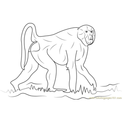 Walking Baboon Free Coloring Page for Kids