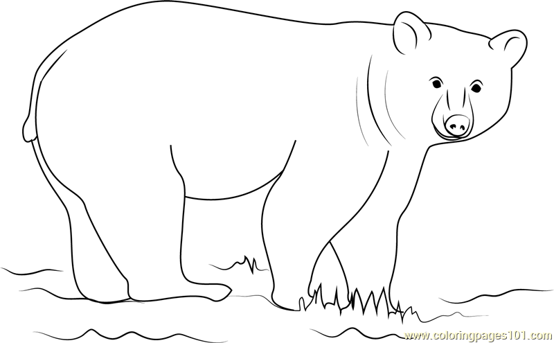 Black Bear Looking at You Coloring Page