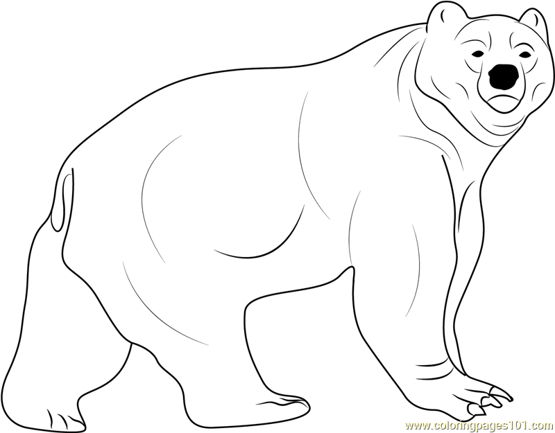 Kodiak Bear Coloring Page Free