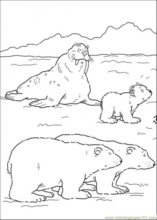 Bears And Walrus Coloring Page