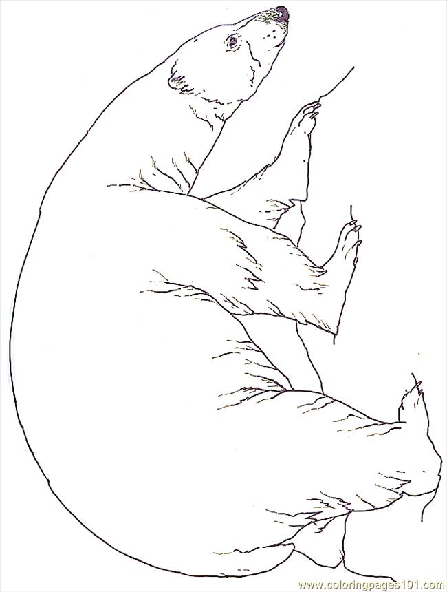 Mural Tsb Polar Bear Reversed Coloring Page