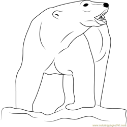 Angry Polar Bear Free Coloring Page for Kids