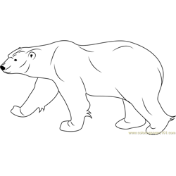 Polar Bear Free Coloring Page for Kids