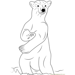 Standing Polar Bear Free Coloring Page for Kids