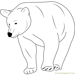 Ursidae Free Coloring Page for Kids
