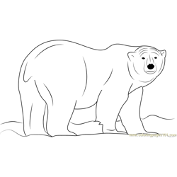 Ursus maritimus Free Coloring Page for Kids