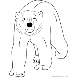 Walking Polar Bear Free Coloring Page for Kids