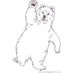 Mural Tsb Polar Baby Bear Reverse Free Coloring Page for Kids