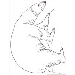 Mural Tsb Polar Bear Reversed Free Coloring Page for Kids