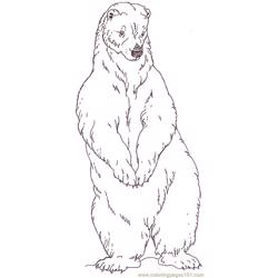 Mural Tsb Polar Father Bear Free Coloring Page for Kids