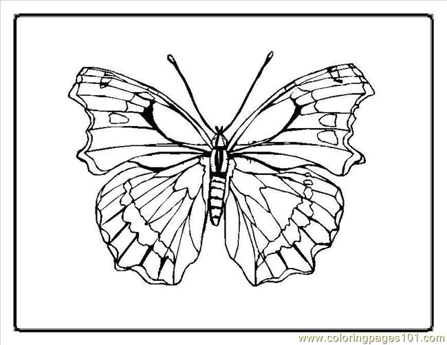 Butterfly Coloring Pages3 Coloring Page