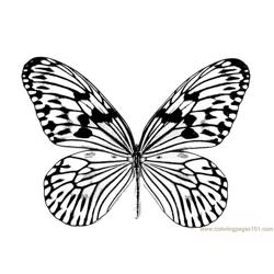 Butterfly Free Coloring Page for Kids