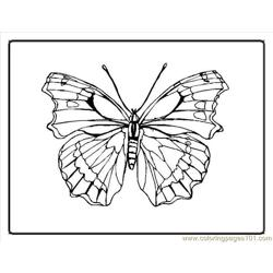 Butterfly Coloring Pages3
