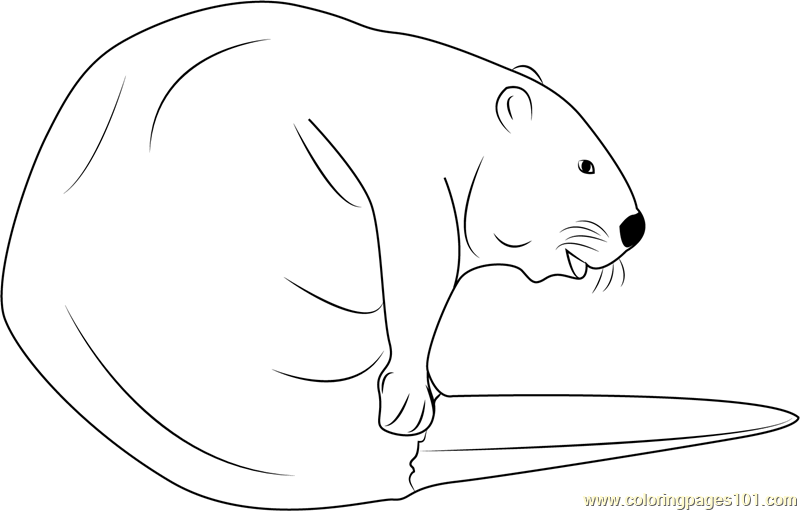 Cute Beaver Coloring Page