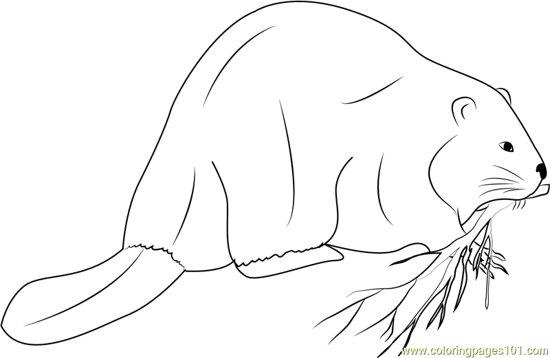 Giant Beaver Coloring Page Free