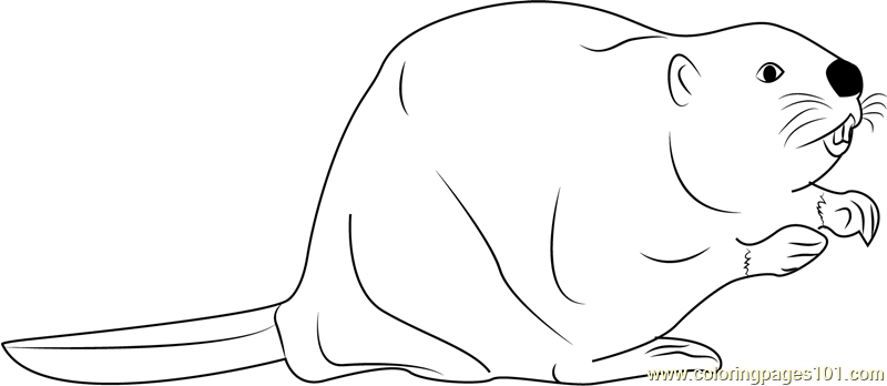 North American Beaver Coloring Page
