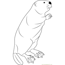 Beaver Standing coloring page