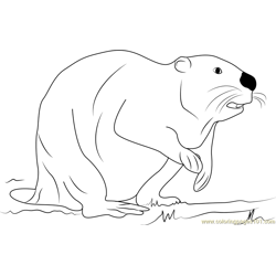 Black Beaver coloring page