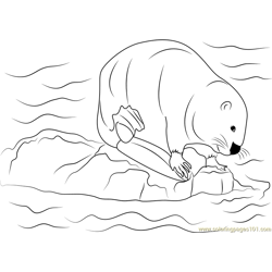 Castor canadensis Free Coloring Page for Kids