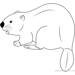 Eurasian Beaver Free Coloring Page for Kids