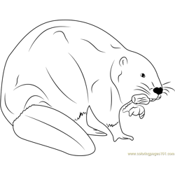 European Beaver Eating Free Coloring Page for Kids