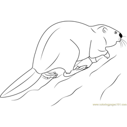 European Beaver Free Coloring Page for Kids