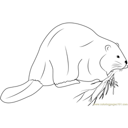 Giant Beaver Free Coloring Page for Kids