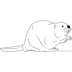North American Beaver Free Coloring Page for Kids