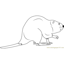 Rodent Beaver Free Coloring Page for Kids