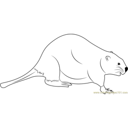 Wobbly Beaver Free Coloring Page for Kids