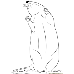 Young Beaver Free Coloring Page for Kids