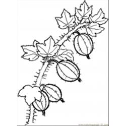 Berries16 coloring page