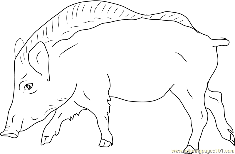 European Wild Boar Coloring Page