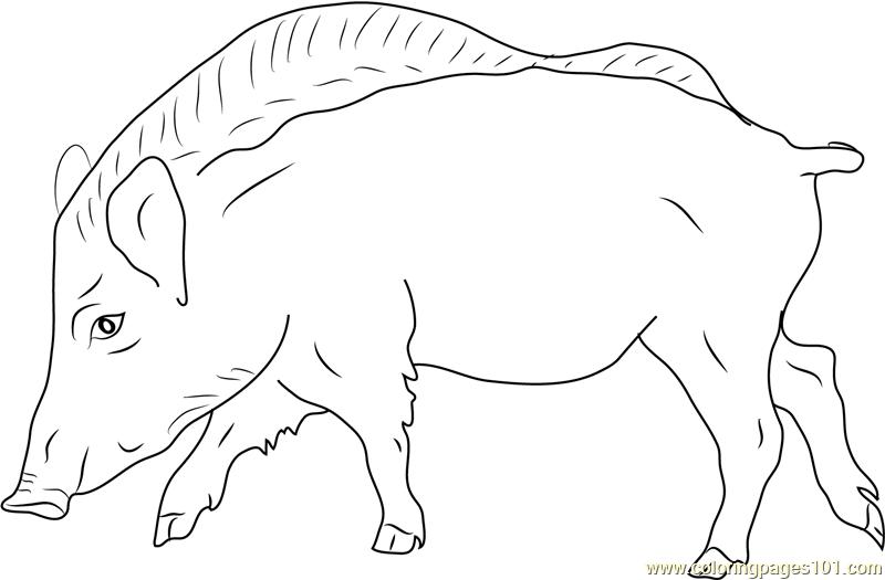 European Wild Boar Coloring Page - Free Boar Coloring ...