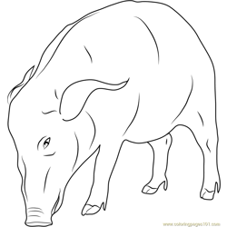 African Boar Free Coloring Page for Kids