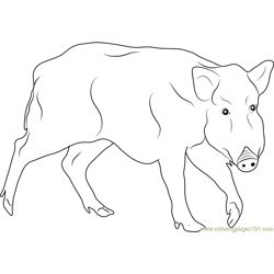 Black Boar Free Coloring Page for Kids