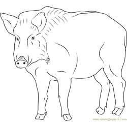 Boar Looking at You Free Coloring Page for Kids
