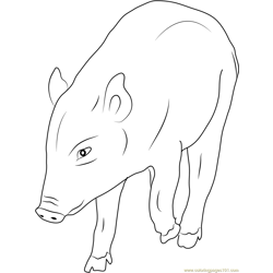 Boar Puppy Free Coloring Page for Kids