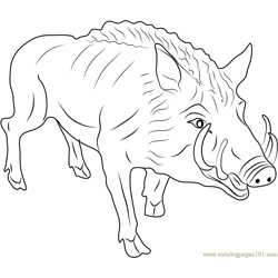 Eurasian Wild Pig Free Coloring Page for Kids