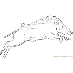 Indian Wild Boar Jumping Free Coloring Page for Kids