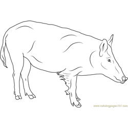 Russian Boar Free Coloring Page for Kids