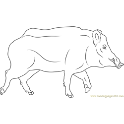 Sus scrofa Free Coloring Page for Kids