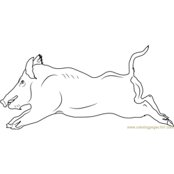 Wild Boar Running Free Coloring Page for Kids