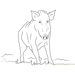 Wild Boar Free Coloring Page for Kids